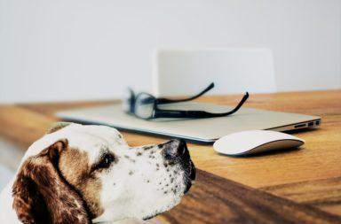 preventief een verzekering voor de hond afsluiten