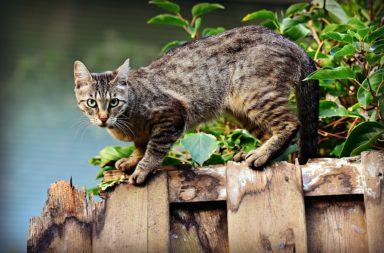 meest voorkomende ziektes bij katten